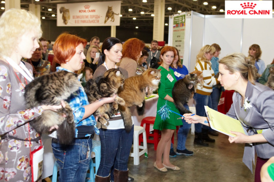 Exhibition Grand Pri Royal Canin in Moscow on 3 and 4 December 2016